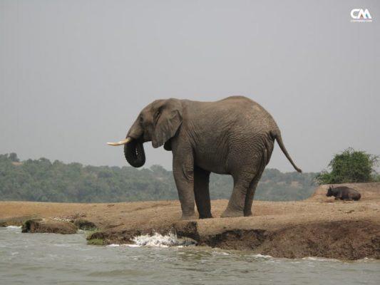 elefant în safari lake elizabeth, uganda