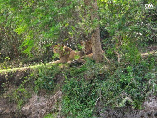 lei în safari, lake elizabeth, uganda